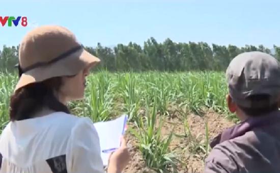 Kiên quyết xử lý vụ DN lấn chiếm đất dân tại Phú Yên