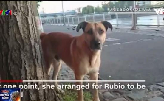 Tình bạn cảm động giữa chú chó vô chủ và nữ tiếp viên hàng không