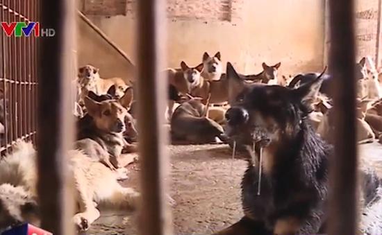 Nhiều con chó tại trạm trung chuyển có dấu hiệu bệnh dịch