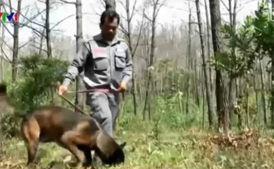 Chó nghiệp vụ hỗ trợ rà phá bom mìn