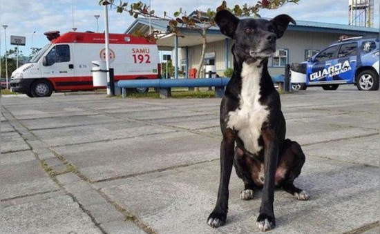 Chú chó đứng chờ trước cửa bệnh viện nơi chủ nhân đã qua đời 8 tháng trước