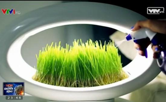 Grasslamp - Thảm cỏ thông minh trong nhà