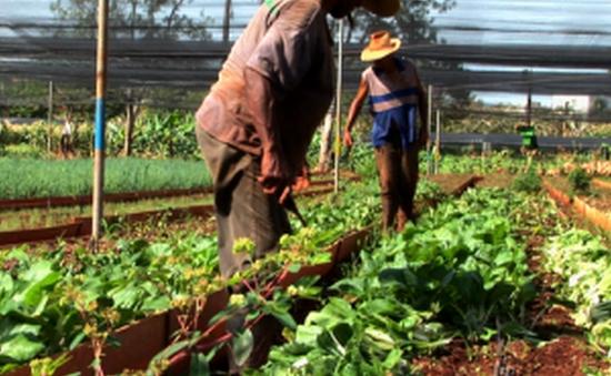 Cuba áp mức giá trần cho lương thực, thực phẩm