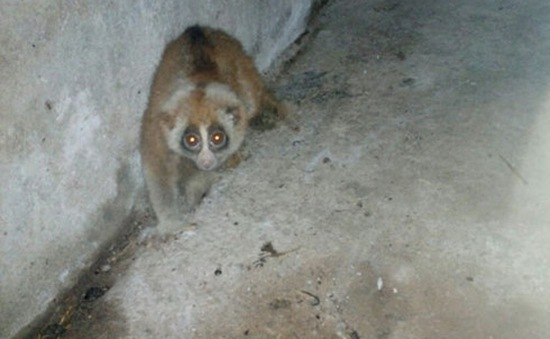 Giải cứu 40 động vật hoang dã đang bị vận chuyển từ Lạng Sơn về Hà Nội
