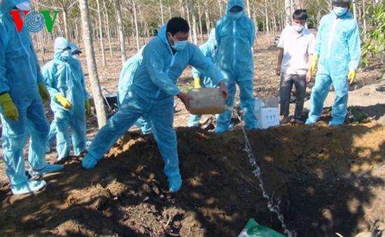 Tiêu hủy khẩn cấp đàn gà 1.000 con dương tính với virus cúm A/H5N6