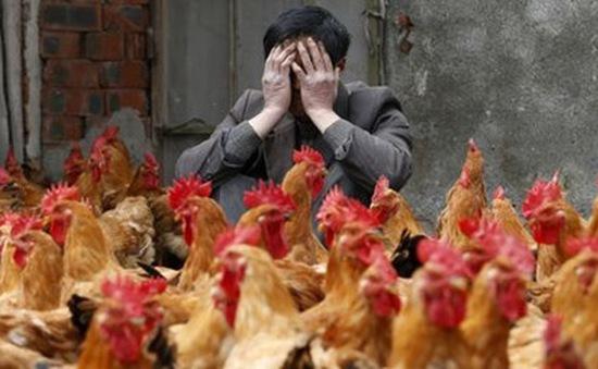 Hai người tử vong vì cúm gia cầm H7N9 tại Trung Quốc