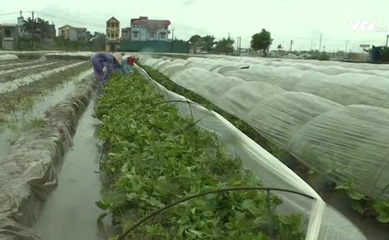 Người dân Hà Nội đội mưa cứu rau ngày bão