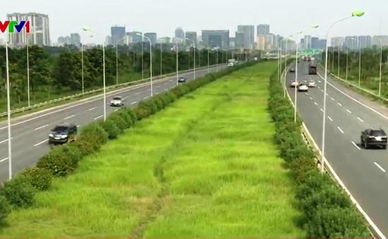 Sau khi xem xét, chi phí cắt cỏ ở Thủ đô còn khoảng 178 tỷ đồng