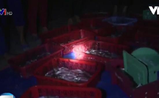 Hà Tĩnh: Người dân Cẩm Nhượng hối hả ra khơi đánh bắt cá