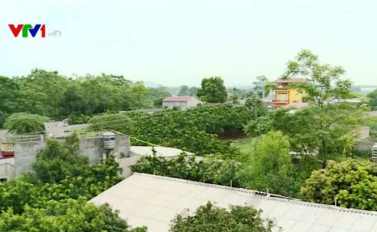 Bắc Giang: Hệ lụy hơn 20 năm từ mua bán đất ruộng trái phép