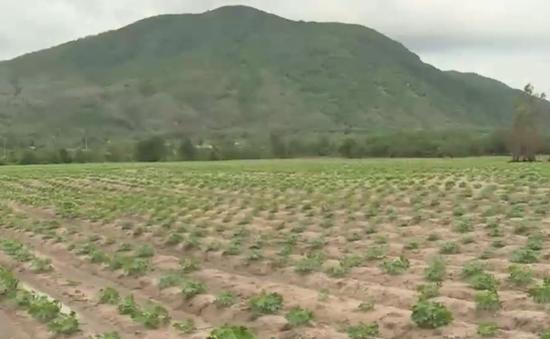 Bà Rịa - Vũng Tàu: Hợp tác xã Quyết Thắng thừa nhận bán đất cho tư nhân