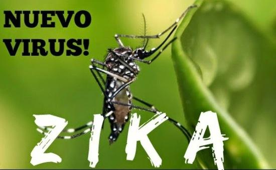 Bộ Y tế khuyến cáo không chủ quan với bệnh do virus Zika lây truyền