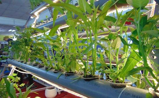 """Mê mẩn với mô hình trồng rau thủy canh tại Tuần lễ """"Nông sản an toàn"""""""