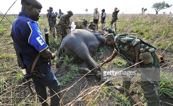 Những chiến binh thầm lặng bảo vệ voi tại Congo