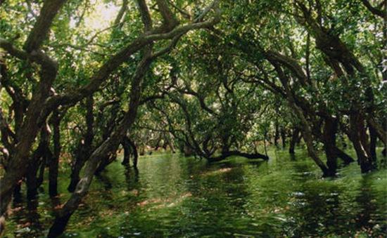 Campuchia thực hiện tốt việc bảo tồn rừng nguyên sinh