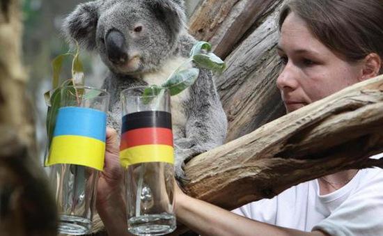 """Hai """"nhà tiên tri"""" động vật dự đoán kết quả EURO 2016 tại Đức"""