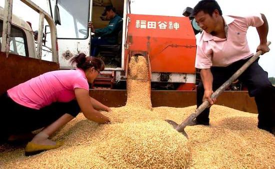 Mỹ chính thức kiện Trung Quốc vì trợ giá nông sản
