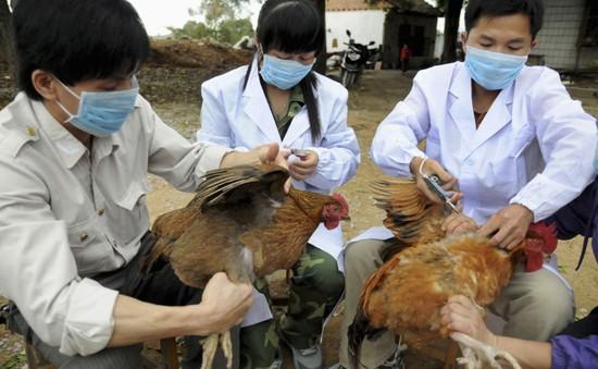 Tăng cường phòng chống virus cúm A/H7N9