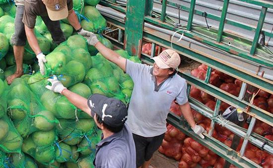 """Thương lái Trung Quốc tăng cường thu mua, dừa khô """"sốt giá"""""""