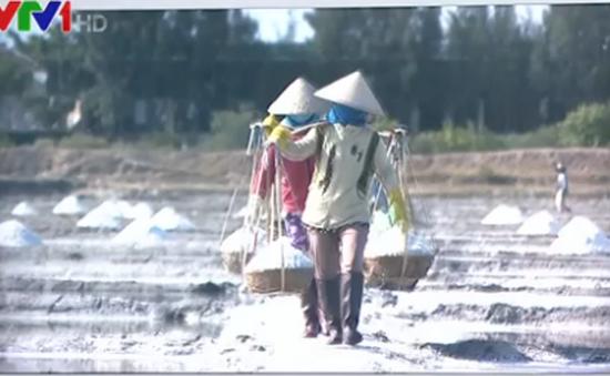 Khánh Hòa: Bán 100kg muối chưa đủ mua một tô phở