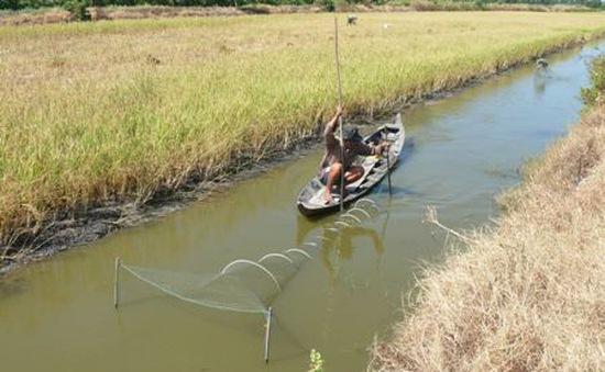Hơn 8.000 hộ dân Cà Mau cần hỗ trợ nước khẩn cấp