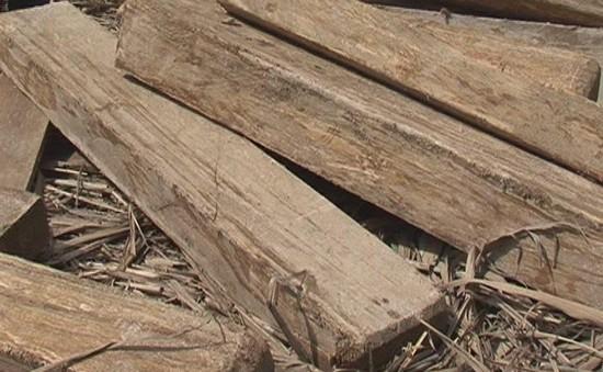 Phát hiện vụ vận chuyển gỗ trái phép tại Bà Rịa - Vũng Tàu