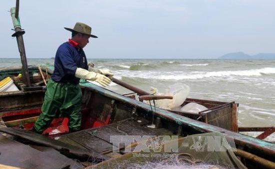 Hà Tĩnh thống kê các hộ dân bị ảnh hưởng bởi sự cố môi trường