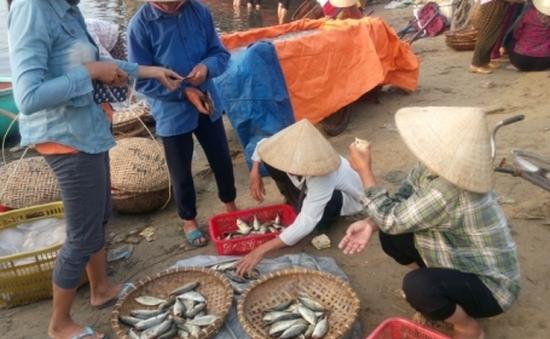 Quảng Trị: Cấp 40 giấy xác nhận nguồn gốc hải sản an toàn