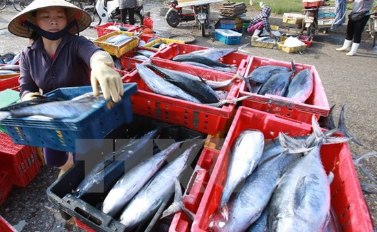 Cuối tháng 8 sẽ công bố kết quả xét nghiệm hải sản của 4 tỉnh miền Trung