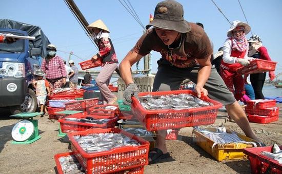 Phó Thủ tướng chỉ đạo xử lý hải sản tồn kho sau sự cố môi trường biển