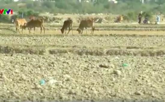 Nhiều xóm làng tại ĐBSCL bị bỏ hoang do hạn mặn