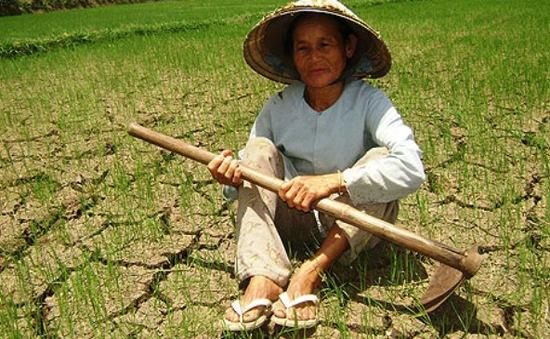 2016 - Năm nông nghiệp gặp khó