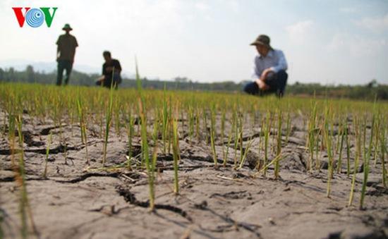 9 tỉnh ĐBSCL được tài trợ ứng phó biến đổi khí hậu