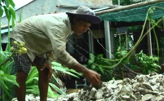 Nông dân Bạc Liêu mất trắng tiền tỷ vì hàu chết
