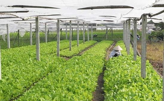 DN Việt đầu tư vào nông nghiệp: Cơ hội song hành khó khăn