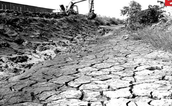 Bất lực nhìn lúa chết khô vì hạn, mặn
