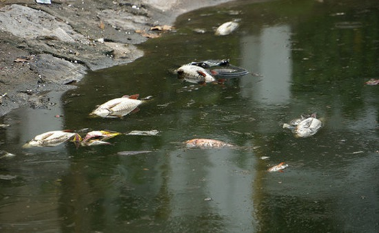 Hồ Hoàng Cầu sẽ được phun rải chế phẩm sinh học từ 11/6
