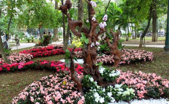 Tăng cường chống trộm hoa ở Hồ Gươm