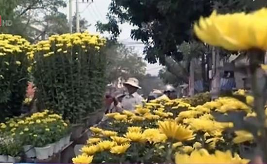 Cung cấp wifi miễn phí tại các đường hoa và chợ hoa