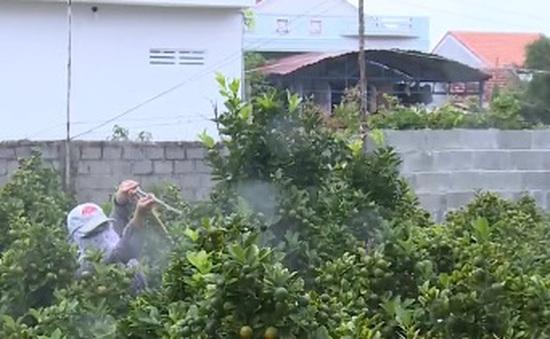 Ô nhiễm do thuốc bảo vệ thực vật từ vùng trồng hoa Tết Phú Yên