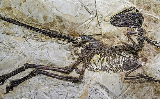 Lần đầu tiên phát hiện hóa thạch não khủng long