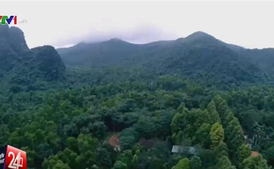 Ngang nhiên đặt bẫy động vật hoang dã trong rừng Pù Mát