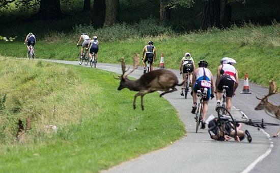 Tai nạn hy hữu trên đường đua xe đạp