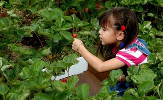Mỹ: Dân thành thị thích thú trải nghiệm làm nông dân