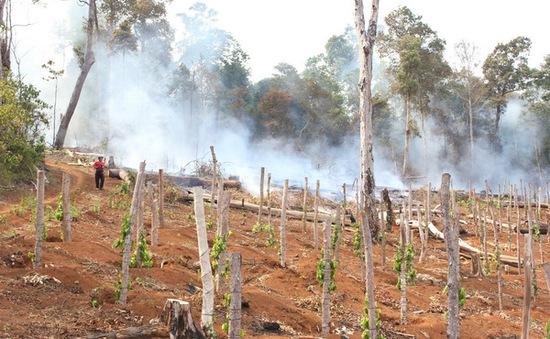 Đăk Nông: 5 doanh nghiệp phải đền bù do để mất rừng