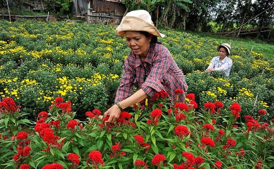 Bỏ ngỏ bản quyền giống gây trở ngại cho xuất khẩu hoa nội địa