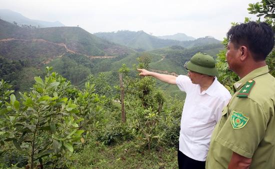 Chủ tịch UBND tỉnh Quảng Ninh kết luận về vụ phá rừng ở Hoành Bồ
