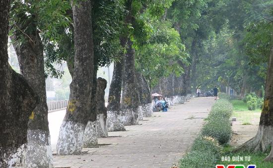 Hà Nội: Di chuyển hàng cây xanh phố Kim Mã, người dân tiếc hùi hụi