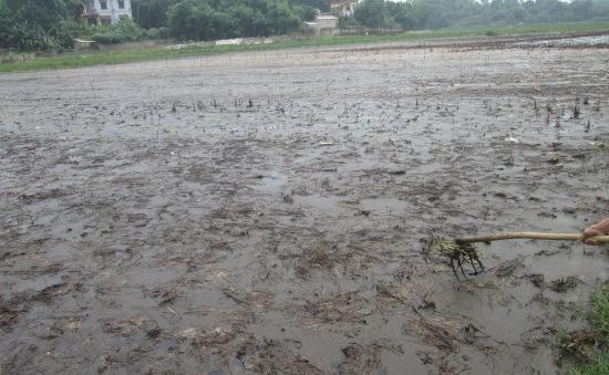 Phú Thọ: Dân bỏ trắng ruộng vì nhà máy xử lý rác gây ô nhiễm