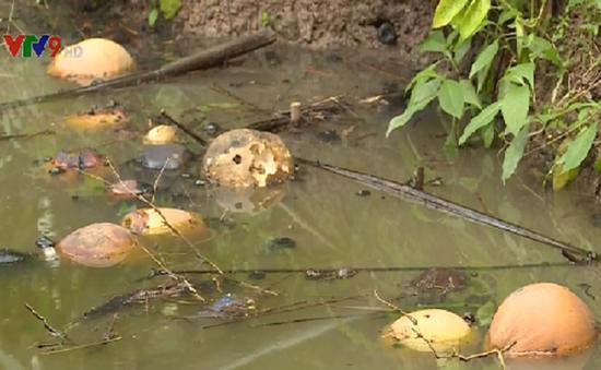 Cây trái hỏng, cá, vịt chết vì nước kênh ô nhiễm